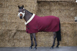 SHOW RUG KENTUCKY BORDEAUX