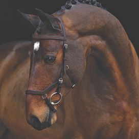 RAMBO MICKLEM TRÄNS COMPETITION BROWN HORSEWARE